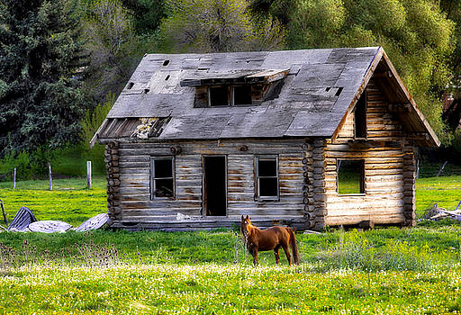 James Steele - Brown Horse and Old Log Cabin