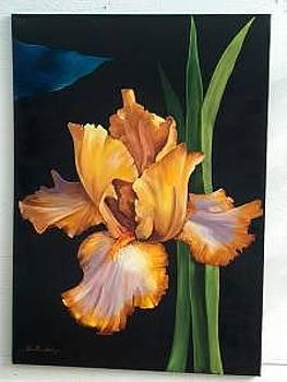 Brown Iris by Stan  Sternbach
