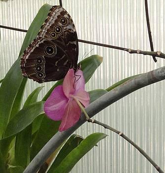 Brown Butterfly Pink Flower by Mozelle Beigel Martin