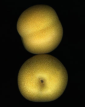 Marsha Tudor - Brown Pear Pair