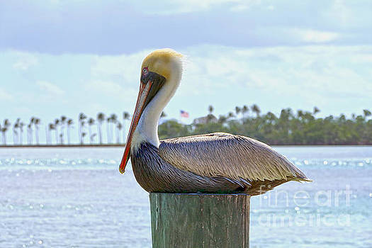 Brown Pelican and Palm Trees by Catherine Sherman