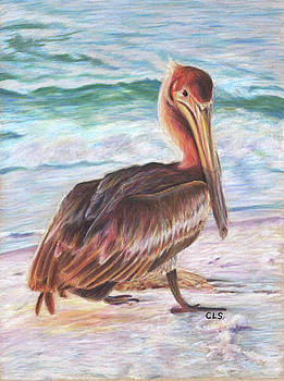 Brown Pelican by C L Swanner