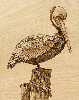 Brown Pelican by Danette Smith