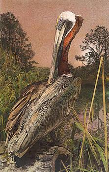 Brown Pelican by John Dyess