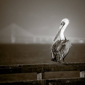 Chris Bordeleau - Brown Pelican on St. Simons Island pier - BW
