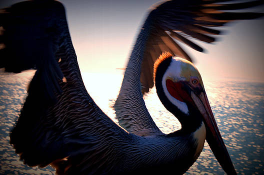 Brown Pelican by Nature Macabre Photography