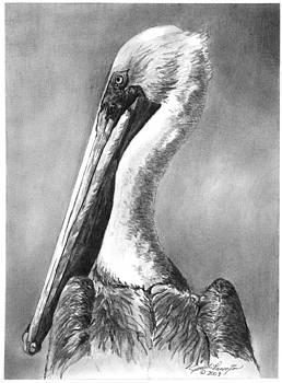 Brown Pelican Portrait by Judith Pennington