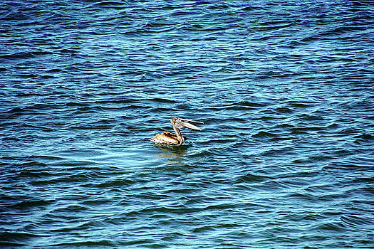 Debbie Oppermann - Brown Pelican Riding The Waves