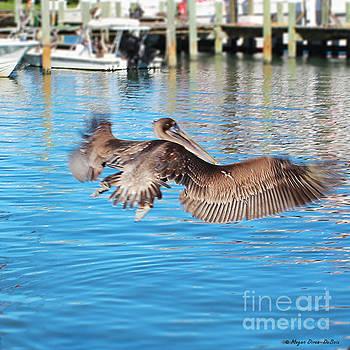 Brown Pelican Taking Flight by Megan Dirsa-DuBois
