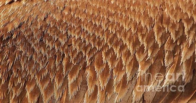 Paulette Thomas - Brown Pelican Wings