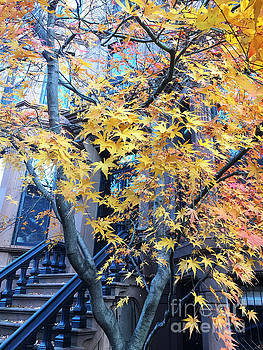 Onedayoneimage Photography - Brownstone in Fall