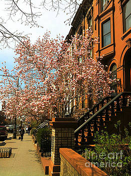Onedayoneimage Photography - Brownstones and Blossoms