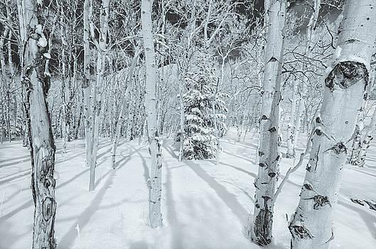 Bruma Is Latin For Winter.  by Bijan Pirnia