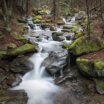 Brush Brook #2 by Dave Schmidt
