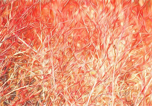Barbara McMahon - Brush Fire