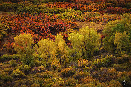 Brush Strokes by Peter Coskun