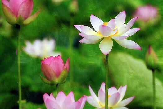 Brushed Lotus by Edward Kreis