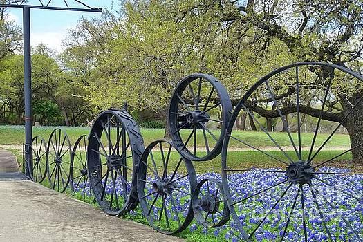 Brushy Creek Bluebonnets by Janette Boyd