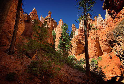 Ricky Barnard - Bryce Canyon II