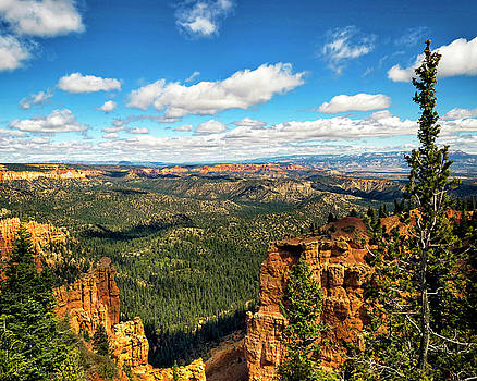 Bryce Canyon Viewpoint by Timothy Bonesho