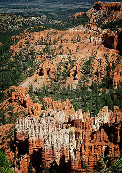 Bryce Canyon XII by Ricky Barnard