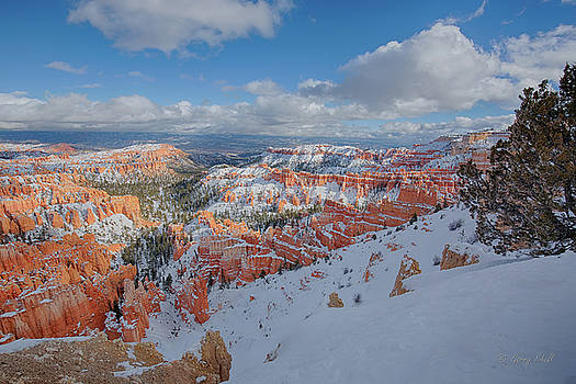 Bryce by Gerry Sibell