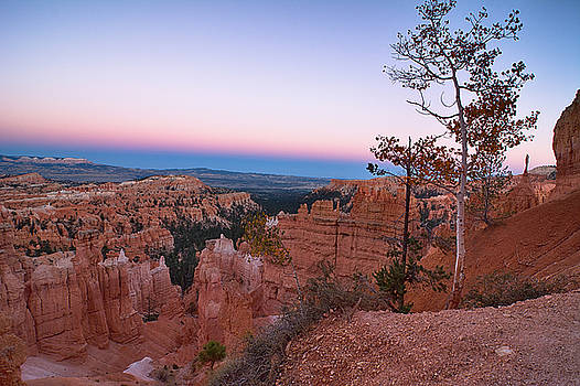 Bryce Tree by Paul Barkevich