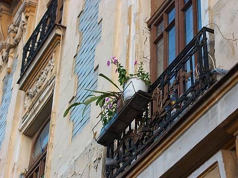 Bucharest 1 by Carole Hutchison