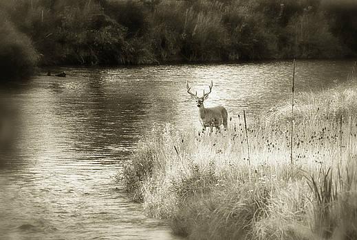 Scott Wheeler - Buck at Mission Creek