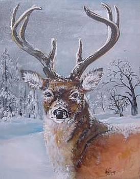 Buck In Snow by Merideth Van Every