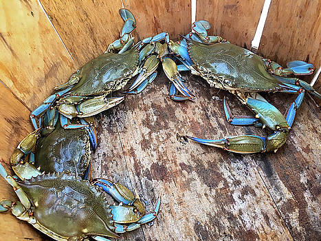 Bucket of Blue Crabs by Jennifer Casey