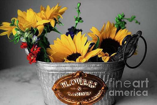 Bucket of Sunflowers by Diana Mary Sharpton