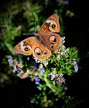 Buckeye Butterfly on Rosemary by Kori Creswell