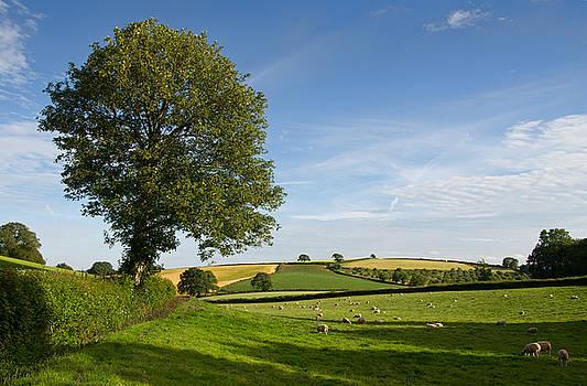 Bucolic Mid Devon by Pete Hemington