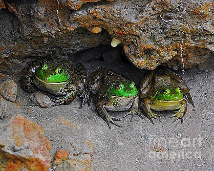 Bud Bullfrogs by Al Powell Photography USA