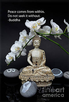 Buddha Quote 2 by To-Tam Gerwe