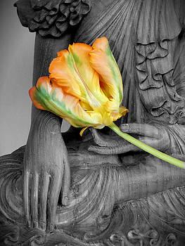 Buddha Tulip by Per Lidvall