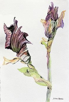 Budding Irises by Mindy Newman