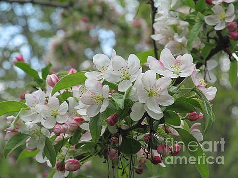 Budding Spring by Loretta Pokorny