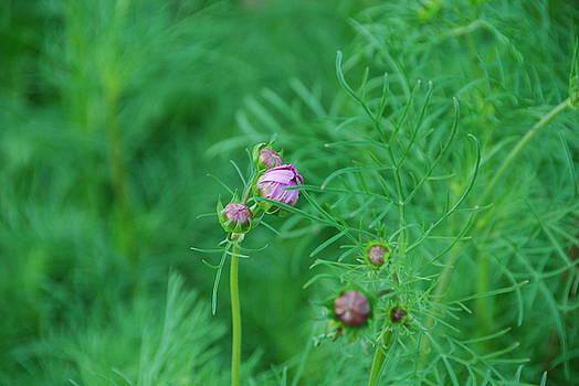 Budding to Bloom by Gabriel Jeane