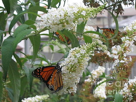Buddleias And Butterflies by Iris Newman