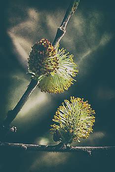 Buds of April by Luke Aldington
