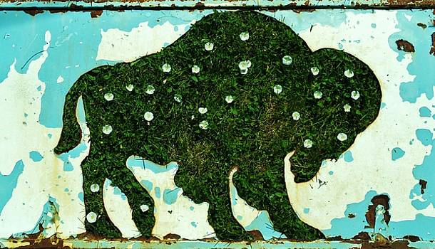 Buffalo and flowers by Larry Campbell