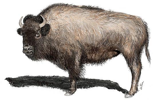 Buffalo, Bubalus by Doug LaRue