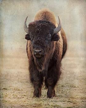 Buffalo Bull by Judy Neill