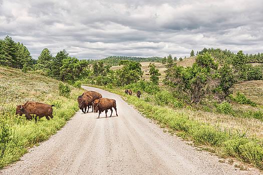 John M Bailey - Buffalo Crossing