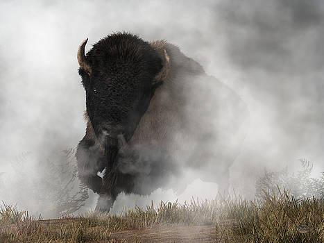 Buffalo Emerging From The Fog by Daniel Eskridge