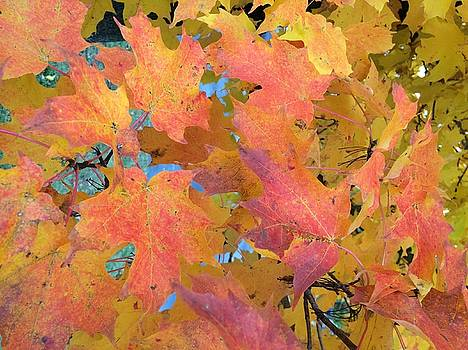 Buffalo Fall Leaves by Mark Weber