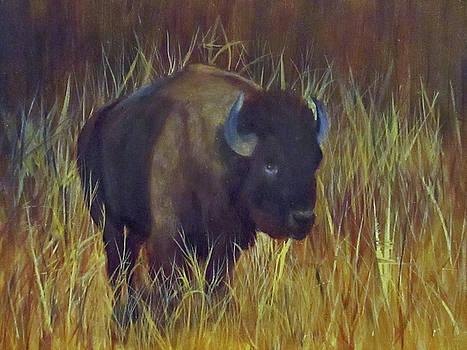 Buffalo Grazing by Roseann Gilmore