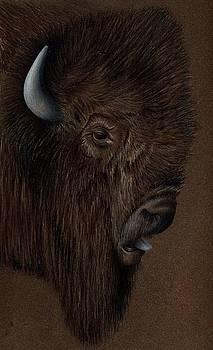 Buffalo Head by Michael Ryan
